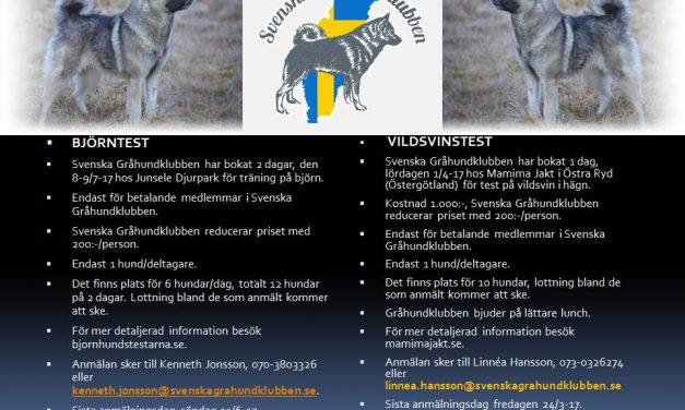 Björn och Vildsvinsträff tillsammans med Svenska Gråhundklubben!