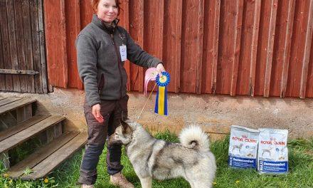Ny champion: SE J(lö)CH ,Örnahalls Fina Takida ,SE50843/2017 , Hd A